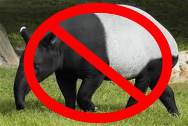no tapir 1